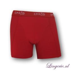 Cavello Boxer